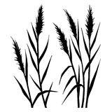 Silhouette of the reed stock illustration