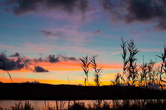 Silhouette of reeds at sunset. With multicolored lights Stock Image