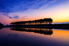 Silhouette and Reflections of row tree. Stock Photography