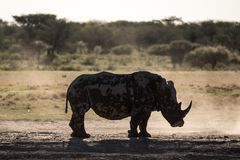The Silhouette of a Rhino in backlight royalty free stock photos
