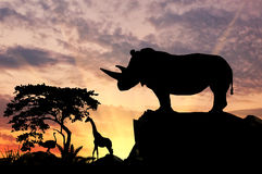 Silhouette of rhino on a hill Royalty Free Stock Photos