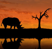 Silhouette of rhino near the river Stock Images
