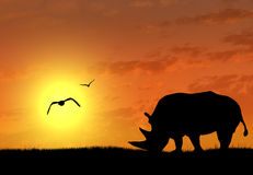 Silhouette of rhino at sunset Royalty Free Stock Photography