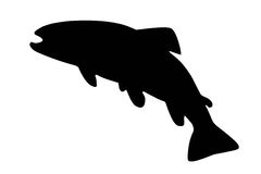 Silhouette of river trout isolate. Black silhouette of river trout on white royalty free illustration