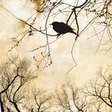 Silhouette of robin on bare tree