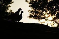 Silhouette romantique d'oiseau Image stock