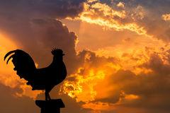 Silhouette the rooster crow in the early morning Stock Image