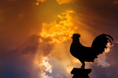 Silhouette of rooster crow stand on in the early morning Royalty Free Stock Photography