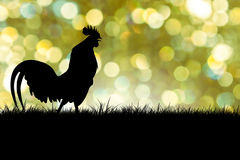 Silhouette of Roosters crow on the lawn Royalty Free Stock Images