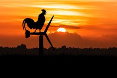 Silhouette of roosters crow Royalty Free Stock Photos
