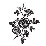 Silhouette rose branch with opened flowers and buds Royalty Free Stock Image
