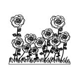 Silhouette rose bush in pasture floral design Stock Image