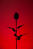 Silhouette rouge de Rose Image libre de droits