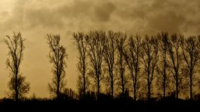 Silhouette of row of Elm trees against a cloudy yellow evening sky. In winter in Oude Kale nature reserve the Flemish countryside stock photography