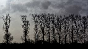 Silhouette of row of Elm trees against dark threatening cloudy sky. Silhouette of row of bare elm trees against dark threatening cloudy skys in winter in Oude royalty free stock images