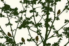 Silhouette of rowan tree Stock Photography