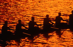 Silhouette of rowing crew at sunset Royalty Free Stock Photos