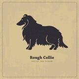 Silhouette rugueuse de chien de colley Image libre de droits