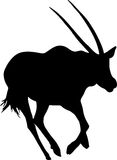 Silhouette of a running oryx gazelle Stock Photos