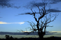 Silhouette sèche d'arbre Images stock