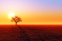 Silhouette sèche d'arbre Photo libre de droits