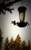 Silhouette at it`s best. Photograph of a Hummingbird in silhouette makes an attractive image to say good morning Royalty Free Stock Images