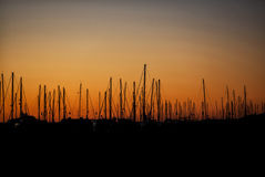 Silhouette of Sailboats at Sunrise Royalty Free Stock Images