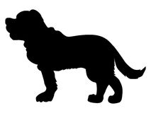 Silhouette of saint bernard dog Royalty Free Stock Images