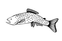 Silhouette of salmon isolate. Stylish illustration silhouette of salmon isolate royalty free illustration
