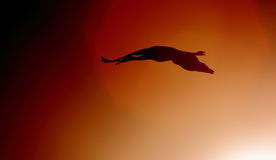 Silhouette of a Sandhill crane flying near the sun Royalty Free Stock Images