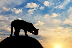 Silhouette sated cheetah on a hill. Against the evening sky Stock Photo