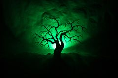 Silhouette of scary Halloween tree on dark foggy toned background with moon on back side. royalty free stock photography