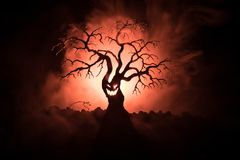 Silhouette of scary Halloween tree with horror face on dark foggy toned background with moon on back side. Scary horror tree with. Zombie and monster demon royalty free stock images