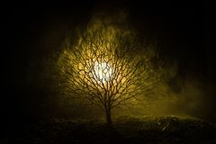 Silhouette of scary Halloween tree with horror face on dark foggy toned background with moon on back side. Scary horror tree with. Zombie and monster demon Stock Image