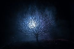 Silhouette of scary Halloween tree with horror face on dark foggy toned background with moon on back side. Scary horror tree with. Zombie and monster demon Royalty Free Stock Image