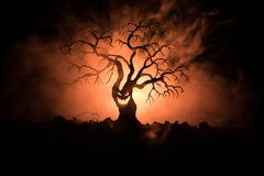 Silhouette of scary Halloween tree with horror face on dark foggy toned background with moon on back side. Scary horror tree with. Zombie and monster demon Royalty Free Stock Photo