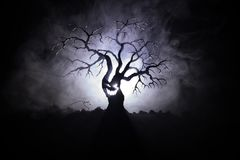 Silhouette of scary Halloween tree with horror face on dark foggy toned background with moon on back side. Scary horror tree with. Zombie and monster demon Stock Photos