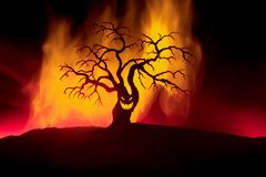 Silhouette of scary Halloween tree with horror face on dark foggy toned fire. Scary horror tree Halloween concept. Selective focus royalty free stock image