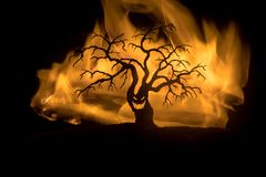 Silhouette of scary Halloween tree with horror face on dark foggy toned fire. Scary horror tree Halloween concept. Selective focus stock image