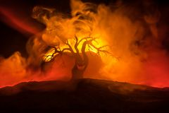 Silhouette of scary Halloween tree with horror face on dark foggy toned fire. Scary horror tree Halloween concept. Selective focus stock photo