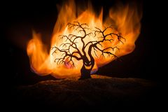 Silhouette of scary Halloween tree with horror face on dark foggy toned fire. Scary horror tree Halloween concept. Selective focus royalty free stock photos