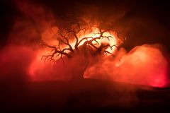 Silhouette of scary Halloween tree with horror face on dark foggy toned fire. Scary horror tree Halloween concept. Selective focus stock photos