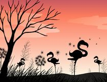 Silhouette scene with flamingo in the field. Illustration Royalty Free Stock Photo