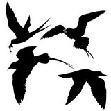 Silhouette of the sea birds. On white background Royalty Free Stock Images
