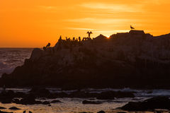 Silhouette of sea birds on rock at Ocean. A flock of sea birds sit on a boulder in the ocean during sunset Royalty Free Stock Photography