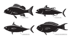 Silhouette of sea and river fish. Vector illustration set of different kinds of fish. Silhouette of sea and river fish for stamps and labels  on white background Stock Photo