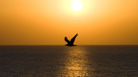 A silhouette of a seagull Royalty Free Stock Photo