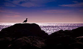 Silhouette of a Seagull Stock Photo
