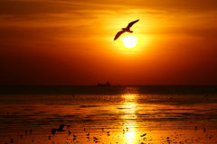 Silhouette of seagull flying over the ocean at sunset stock photo