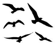 Silhouette of seagull flying Royalty Free Stock Photo